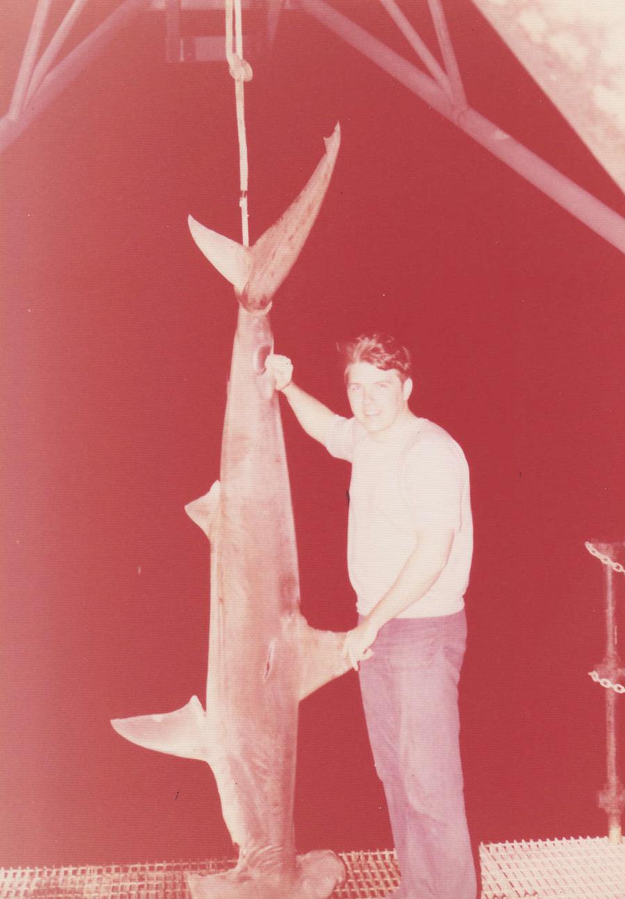 Large_Hammerhead_shark